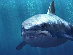 MAYA制作逼真鲨鱼建模教程