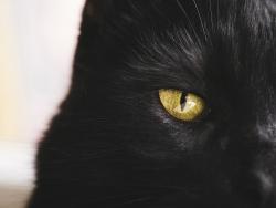 如何拍摄黑色宠物