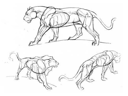激发孩子灵感的动物速写图