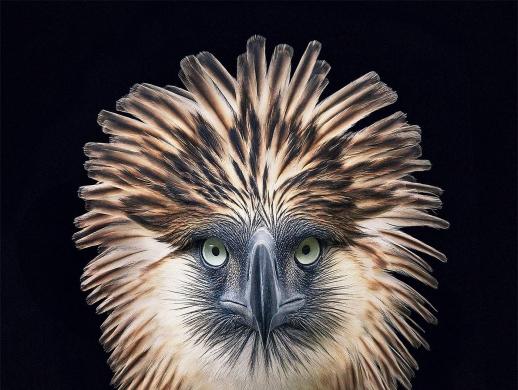 以保护动物为主题的摄影作品欣赏