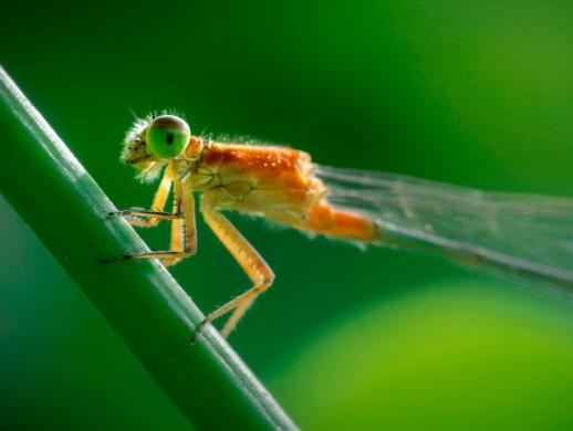 19张微距昆虫摄影作品欣赏