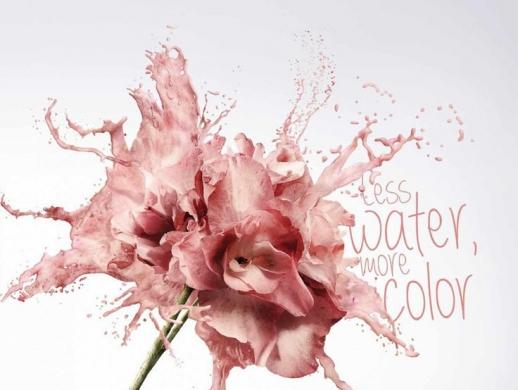 23张花卉主题海报设计