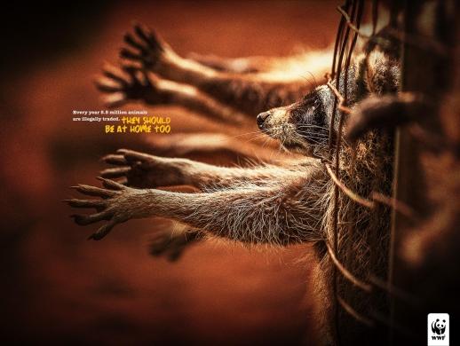 3张保护野生动物宣传海报设计