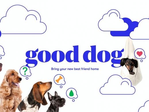 在线宠物平台VI设计