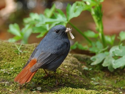 可爱的小鸟