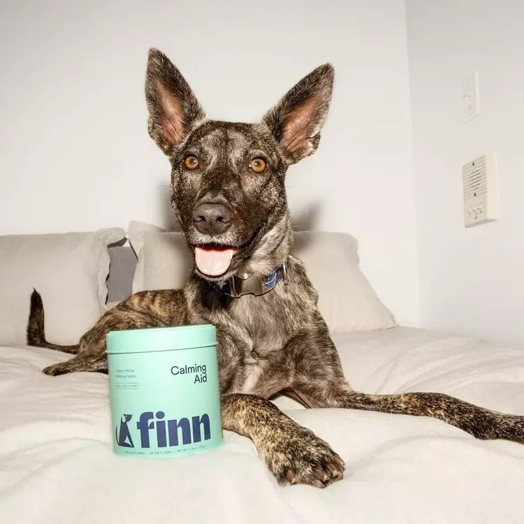高端狗狗罐头包装设计