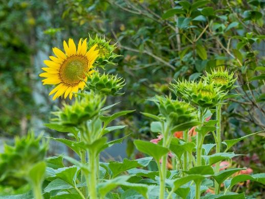 我们都是向阳花