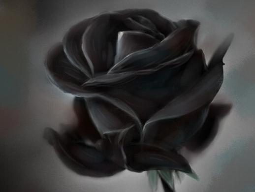 手绘黑玫瑰